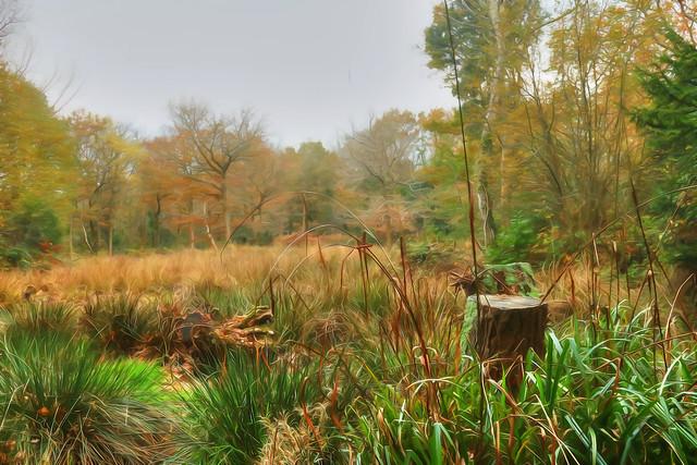 Jurassic View at Warsash Common, Hampshire, UK