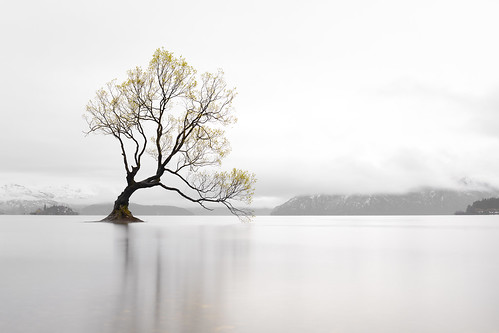 wanaka newzealand thattree tree longexposure misty mist mountains snow peace calm peacefulness calmness serenity