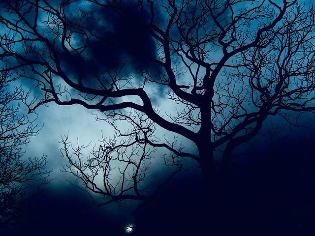 Night of the Dendrite