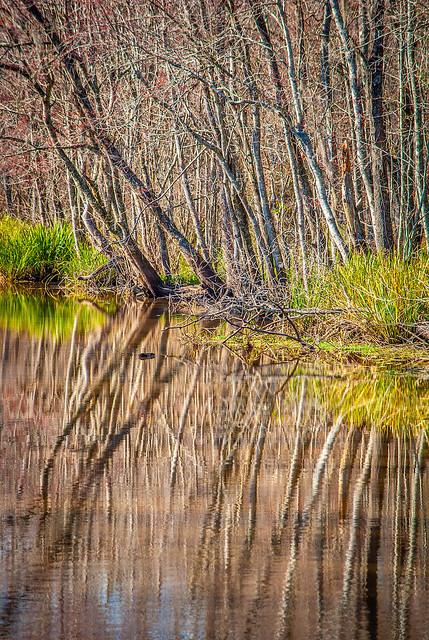 Swamp Mirrors