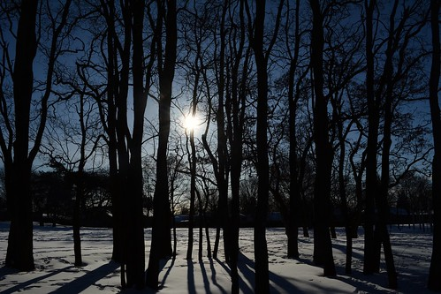 Silhouette of trees in Oakdale Park, Oakville | by Writerstride