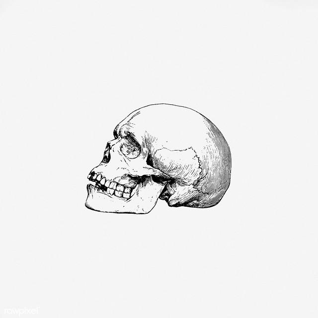Skull in vintage style