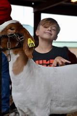 Photos | Harvest Festival Livestock Show