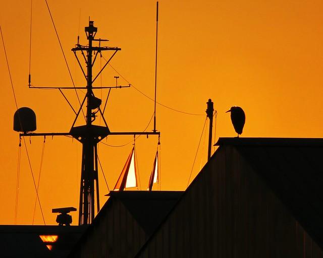 Sunset heron silhouette