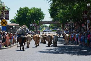 Fort Worth - Longhorn Backsides | by Drriss & Marrionn