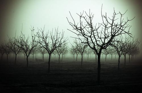 Grey of Winter