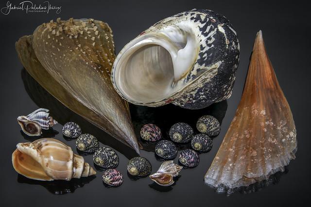 Worldwide seashells