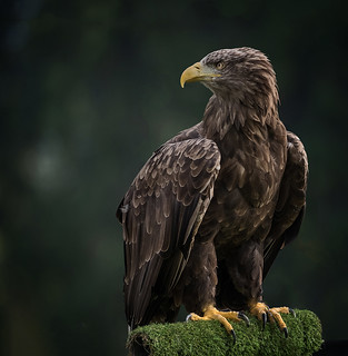 2nd place - Where Eagles Stare - Phil Robson | by Ponteland Photographic Society