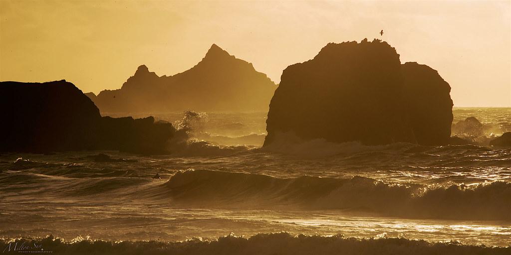 Golden Waves, Golden Seascape