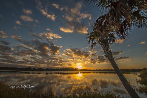 sun sunset pond lake clouds cloudy sky weather palms palmtrees trees water reflect reflection nature mothernature outdoors greatoutdoors fortpierce florida usa