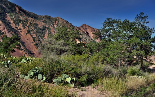 A Mountainside as a Backdrop for Plantlife in the Chisos Basin (Big Bend National Park) | by thor_mark 