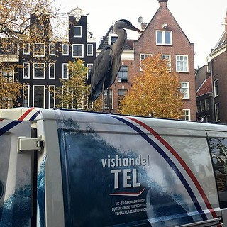 #heron #vishandel #amsterdam #nature | by jonworth-eu
