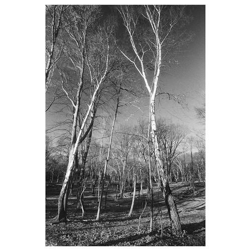 Epping Forest | by RickJeav