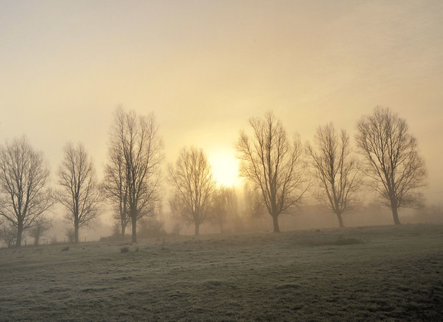 Why I love foggy, icy mornings :)))