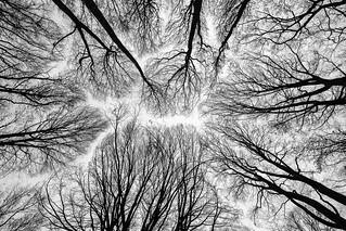 Tree puzzle | by der LichtKlicker