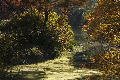 brooksidegardens maryland autumn fall