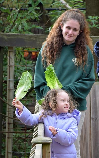 Show Us Your Lettuce