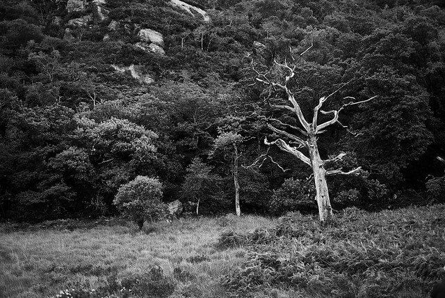 white_tree_L2014149