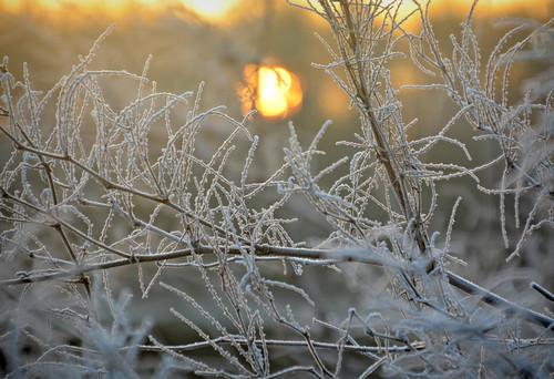 day breaks urmston uk north nikon northern northwest now sunset sunrise plot19 photography landscape love light england britain winter misty frozen frost