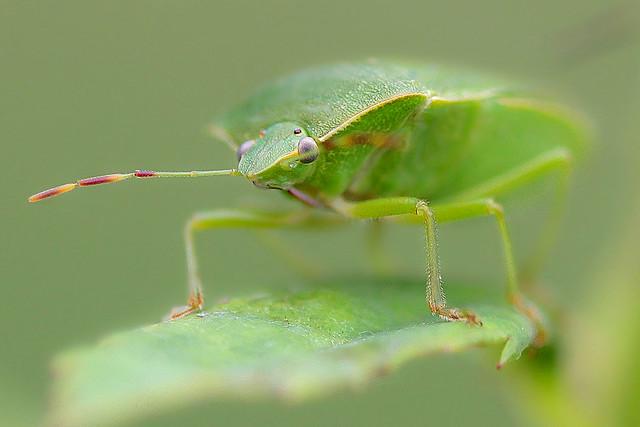 MacroMondays#Green