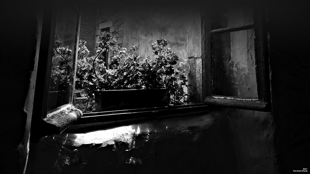 Les reflets de la jardinière.