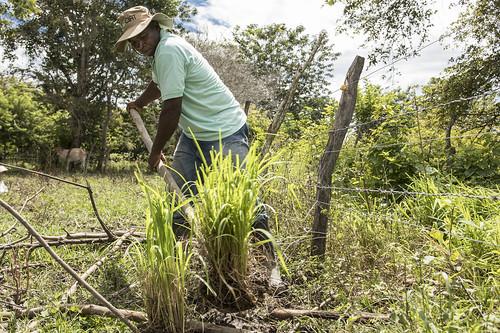 Proyecto: Desarrollo y uso de recursos forrajeros en sistemas sostenibles de producción bovina para el departamento del Cauca   by CIAT International Center for Tropical Agriculture
