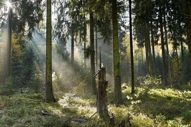 Märchenwald / Enchanted forest