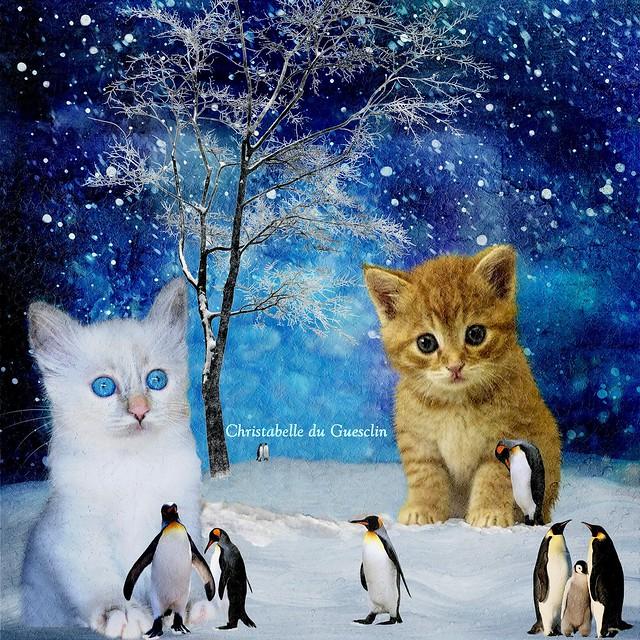Liliputian pinguins pets for kittens