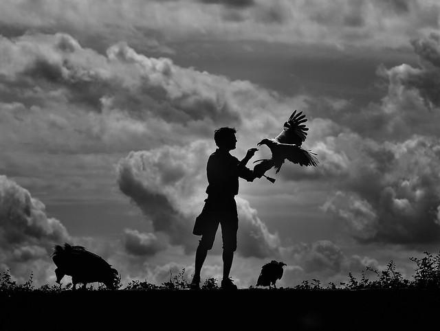 Le fauconnier III