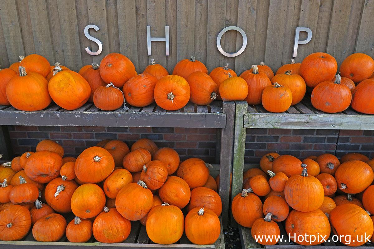 pumpkin,pumpkins,shop,halloween,orange,farm shop,cheshire,UK,England,Hollies,The Hollies