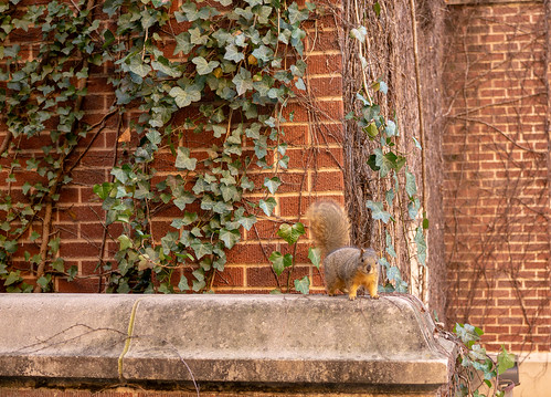 Squirrel-1 | by akervand