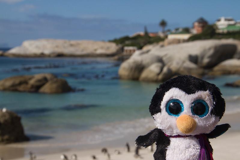 Petit Pingouin, Boulders Penguin Colony