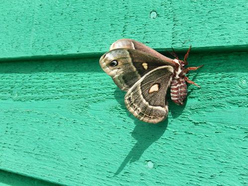 Linkletter Provincial Park - vlinder