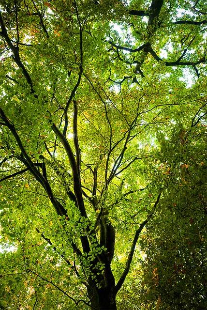 Sun Dappled Green