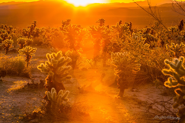 Fiery Sunrise Among the Cacti