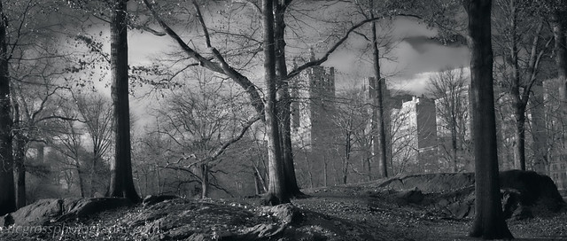 the Upper West Side Through Trees BW Version