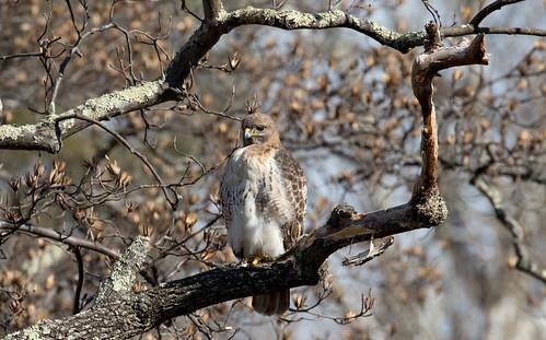 Birds at Maymont   by BartCam