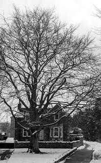 4. ThePriorsford Tree B&W-
