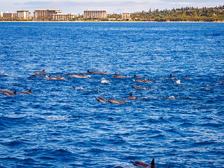 Hawaiian Spinner Dolphins | by itsmarykate