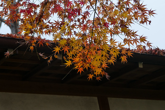 Leaves and eaves