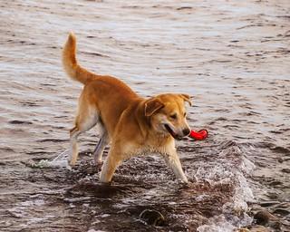 Dog Water Fun | 7. September 2011 | Fehmarn - Germany