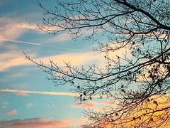 Amanecer en Otoño #2018 #Nijmegen #netherlands #autumn #tree #leaf #season #sky #blue #sunrise #color #orange #iphone6s #cloud