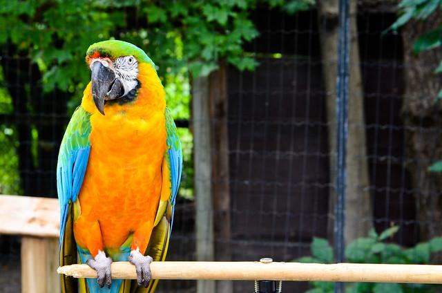 Macaw Landscape