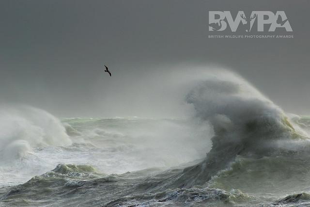 Coast & Marine Category Winner, British Wildlife Photography Awards 2018