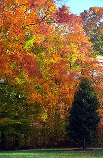 "Cincinnati - Spring Grove Cemetery & Arboretum ""Lush Autumn Over Naked Christmas Tree"" 