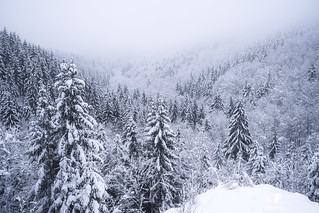 A Winter Tale in Franconia   by stephan_amm