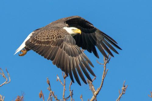 outdoor seaside shore sea sky water nature wildlife 7dm2 ocean canon florida bird bif flight raptor