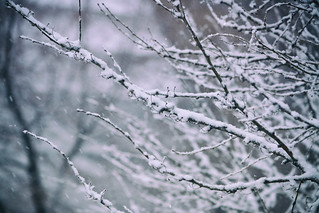 Frenzied Flurries | by flashfix