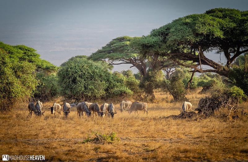 Kenya - 0034