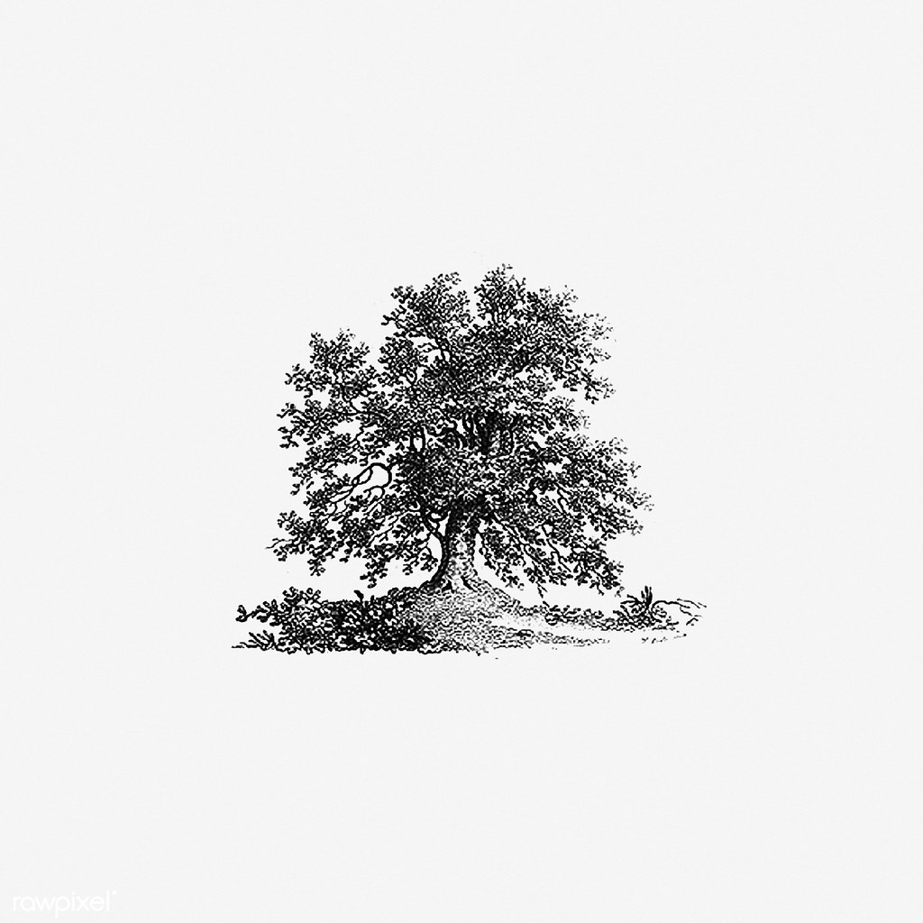 Vintage Tree Illustration Free Download Under Cc Attributi Flickr